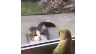 Parrot playing peekaboo with a cat