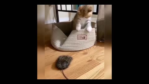 Funny and Cute Cat new video