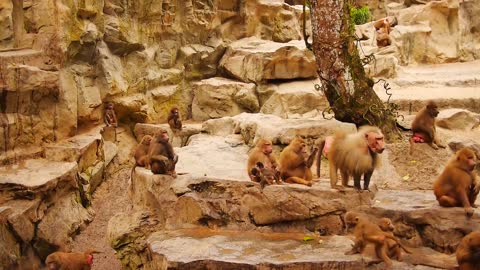 Macaque Monkeys Family Gathering Near Water Fall