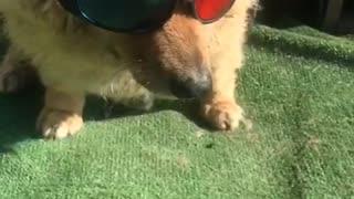cool dog jackie
