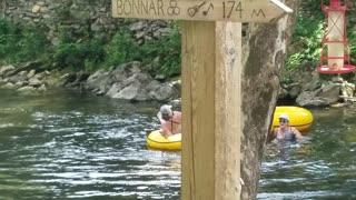 Alligator Surprises River Floaters