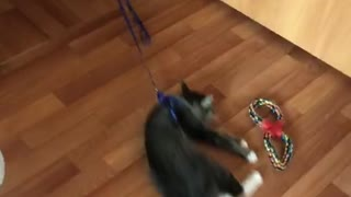 Dog Wants to Play With a Cat