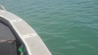 Fisherman Reels in Massive Crocodile