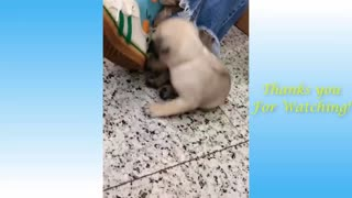very funny small animal pets part 2