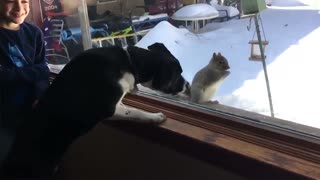 Try Not To Laugh Watching Funny Animal Fails Compilation #1