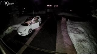 Clever Bear Opens Car Door