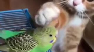 Cat trying to pat bird gently