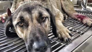 Rescue Human Best Friend's