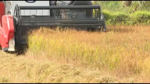 Rice Harvesting Machine