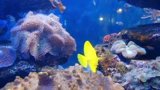 A fish paradise