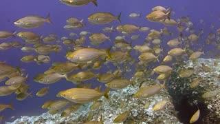 Deep Sea Discovery
