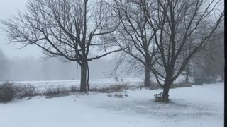 Winter Weather Snow Storm Relaxing Outside Nature Natural Video (01-25-2021)