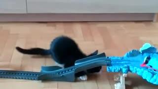 Adorable kitten attacks toy train set