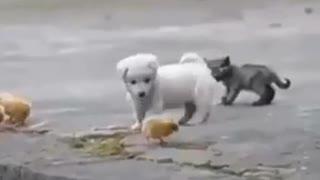 Perrito tierno y juguetón