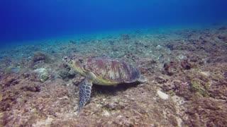 Cute turtle underwater