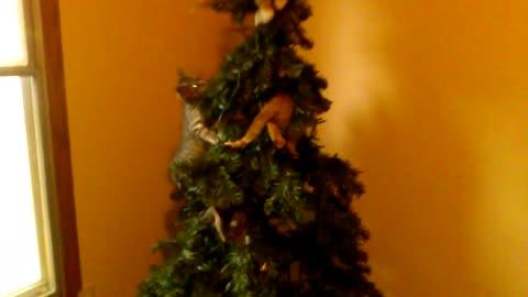 Kittens Destroy Fake Tree