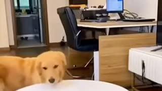 Dog tricks his owner