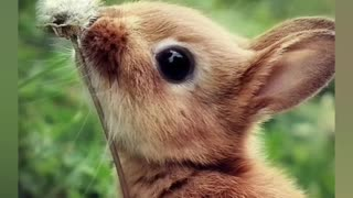 The cutest babies animals