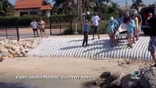 Animals: Rehabbed Loggerhead Turtle Released