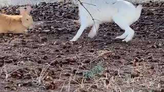 Bunnies Playfully Roughhouse Under a Tree