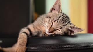 Sleep animals