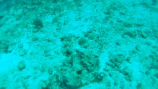 Cancun Mexico Carribean Scuba Diving Part 4
