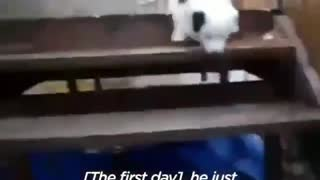 Dog dances with bride during wedding so cute