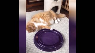 Funny Cat Playing With A Snake