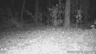 Bobcat TVA 10 16 2020