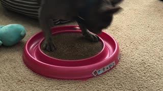 Bruno playing