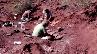 Argentine dinosaur remains could be world's largest