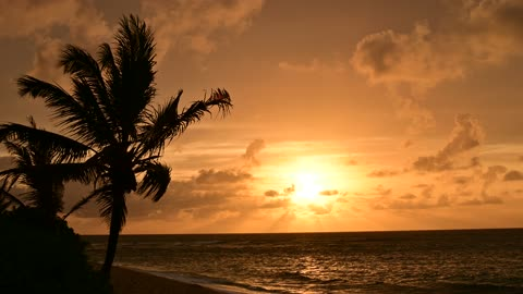 Sunset Beach Sunset with Coconut Tree and Ocean Waves