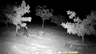 Raccoon drying paws
