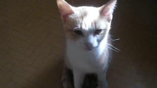 Talking cat Pastelenokminikha.