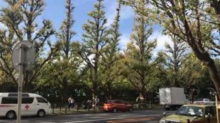 Momiji in Tokyo, Japan