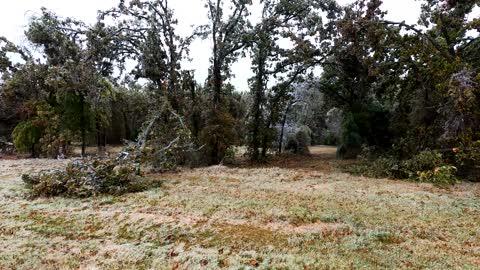 Ice Storm Trees Crashing! Widespread Damage!!!