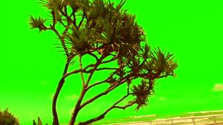 Green Screen Sand Beach Tree for Video Creators