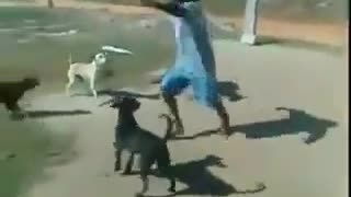 dogs fight with drunk