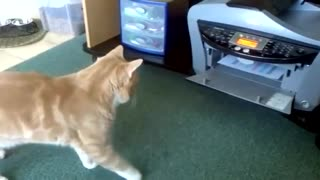 Cat cat cat cat cat cat act