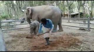 Baby Elephant bonding with trainer