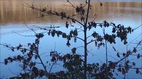 Beavers at Saffin Pond