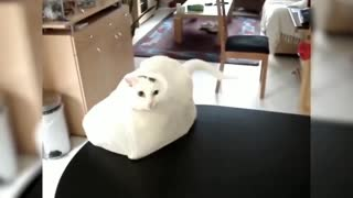 cats getting scared