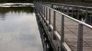 Humber bay water pon