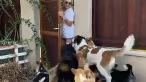 A group of dogs so happy when their master comes home