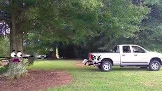 Elephant Attacks Car | Wild Animal