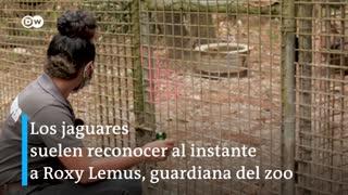 Zoológico de Belice durante la pandemia