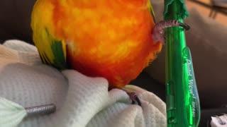 Parrot won't return his mom's pen