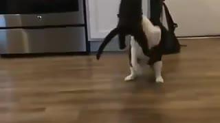 cat rolling crazy