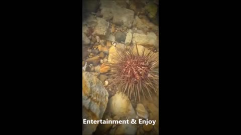 Top viral different water animal amazing fish video