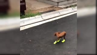 Running puppy l